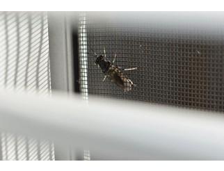 Mückennetz Moskito Fliegengitter 80 cm breit